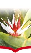Sider - piante sintetiche